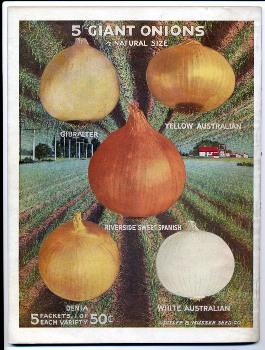 Aggeler & Musser 1920 catalog back - onions
