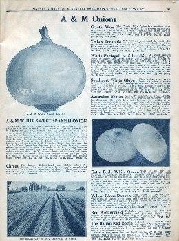 Aggeler & Musser 1927 p. 22 - onions