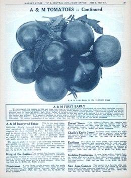 """Aggeler & Musser 1929 catalog """"Tomatoes"""""""