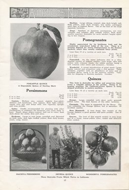 Armstrong Nurseries 1921 catalog p. 17