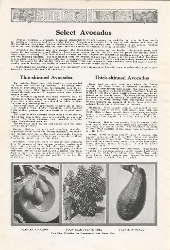 """Armstrong Nurseries 1921 catalog """"Select Avocados"""""""