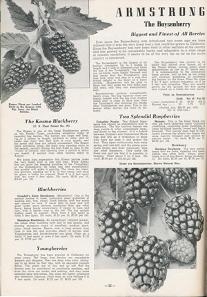 "Armstrong Nurseries 1937 catalog ""The Boysenberry"""