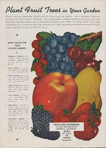Diegaard Nurseries 1943 catalog back