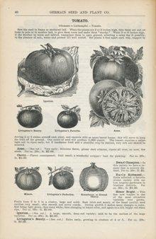 Germain Seed Company 1888, p. 40