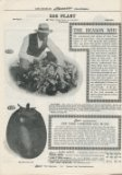 Germain Seed Co. 1915 eggplant