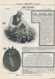 Germain Seed Co. 1915 eggplant