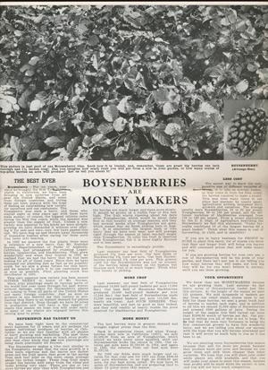"Knott's Berry Place 1938 catalog ""Boysenberries"""