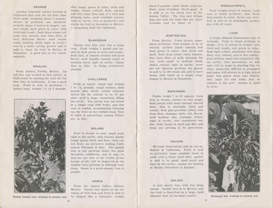 Newbery Sherlock Avocado Nurseries 1917 catalog p. 10