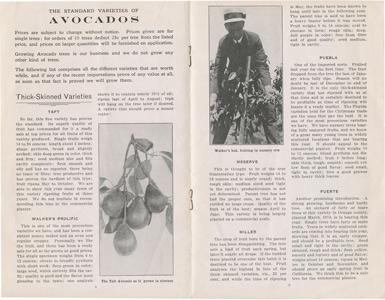 Newbery Sherlock Avocado Nurseries 1917 catalog p. 8