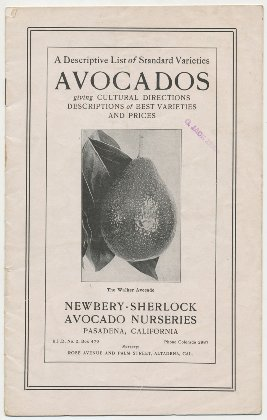 Newbery Sherlock Avocado Nurseries 1917 catalog cover