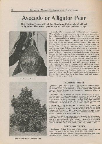 Theodore Payne 1918 p.16