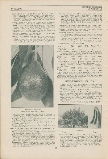 Pioneer Nurseries 1924 - avocados