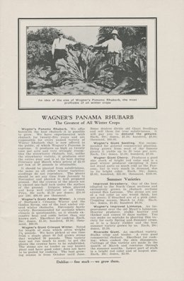 Wagner 1928 Panama Rhubarb